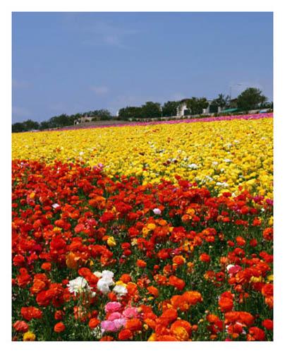 flowerfieldssml