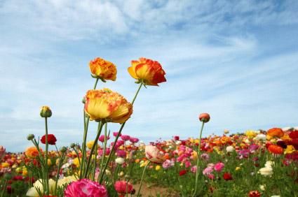 flowerstickingup